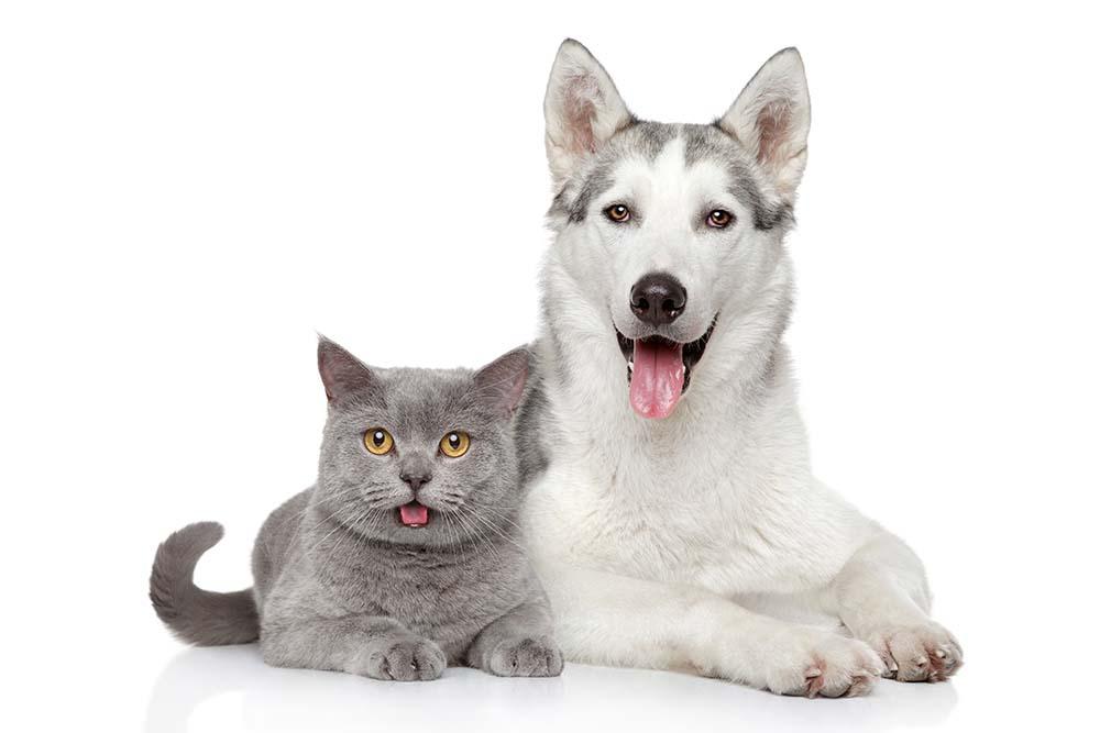 大事なペットに保険があれば安心!猫ちゃんワンちゃんにお勧めの保険とは
