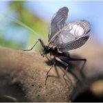 秋の虫の鳴き声は何?コオロギ?正体を聞き分けるポイント