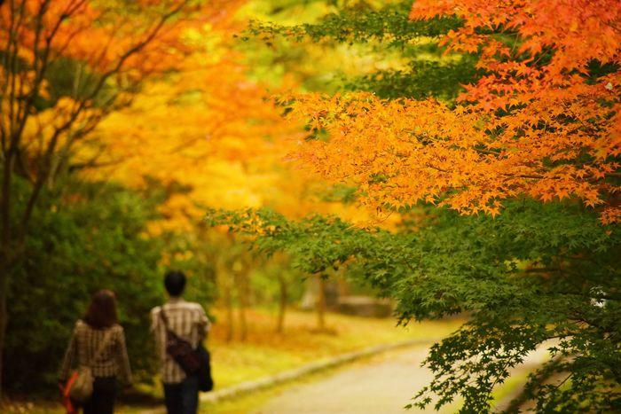 強羅温泉に日帰りで行くなら紅葉の時期が一番おすすめな4つの理由