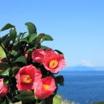 伊豆大島でレンタカー!釣りを楽しむための3つのポイントとは?